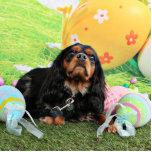 Pascua - perro de aguas de rey Charles arrogante - Esculturas Fotograficas