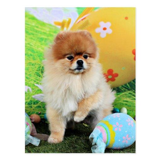 Pascua - Pomeranian - Dexter Tarjetas Postales