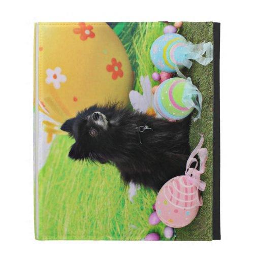 Pascua - Pomeranian - oso