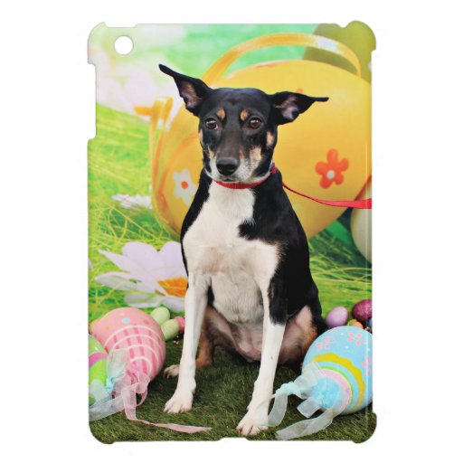 Pascua - rata Terrier - Georgia