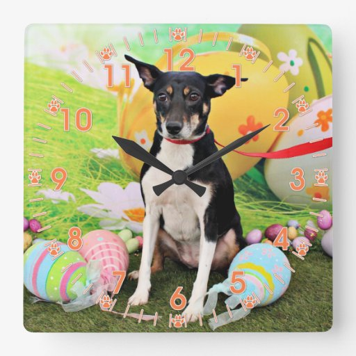Pascua - rata Terrier - Georgia Reloj