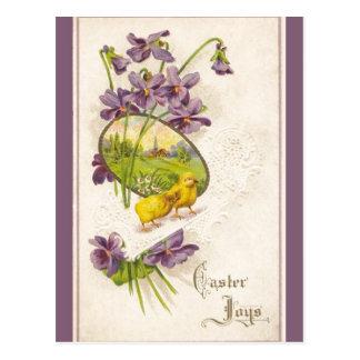 Pascua - violetas de los polluelos y postal