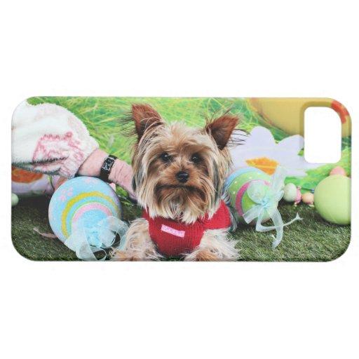 Pascua - Yorkshire Terrier - descarados iPhone 5 Cárcasa