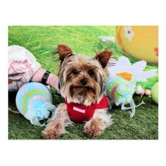 Pascua - Yorkshire Terrier - descarados Postal