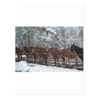 Pase por alto el paseo de la mula del parque nacio tarjeta postal