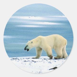 Paseo a solas del oso polar pegatina redonda