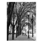 Paseo alineado árbol tarjetas postales