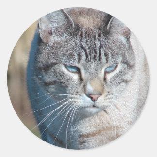 Paseo de gato pegatina redonda