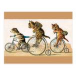 Paseo de la bicicleta tarjetas postales