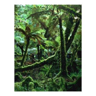 Paseo de Minnehaha, la selva tropical del Fox Flyer Personalizado