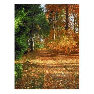 Paseo del bosque del otoño postal