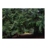 Paseo del bosque invitación 12,7 x 17,8 cm