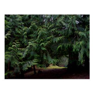 Paseo del bosque tarjetas postales