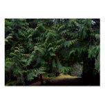 Paseo del bosque tarjetas de visita grandes