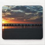 Paseo del camello de la puesta del sol, Broome, Au Tapete De Raton