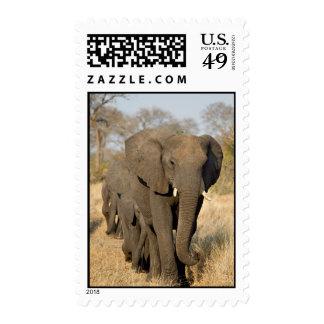 Paseo del elefante franqueo
