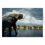 Paseo del elefante tarjetas