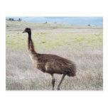 paseo del emu tarjetas postales