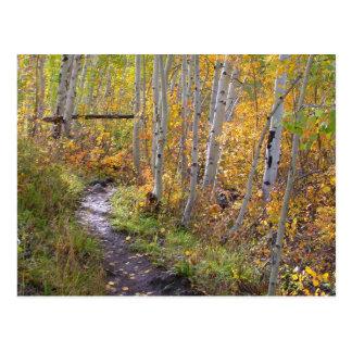 Paseo del otoño tarjeta postal