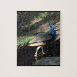 Paseo del pavo real puzzle con fotos