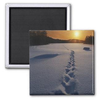 Paseo solo de la nieve iman de frigorífico