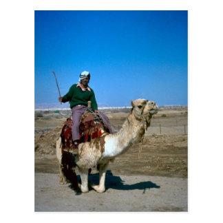 Paseos del camello en el mar muerto postales