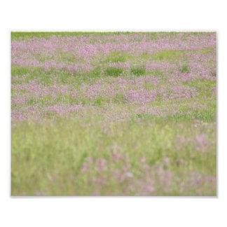 Pasión púrpura 10 x impresión fotográfica 8 fotografía