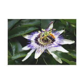 Pasionaria - fotografía floral impresiones en lona