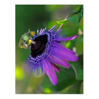 Pasionaria Passiflora Postales