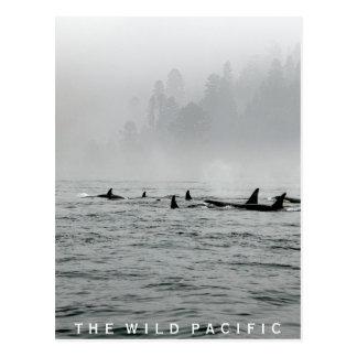 Paso de ballenas tarjeta postal