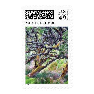 Paso de Glengesh en el árbol viejo de Irlanda