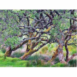 Paso de Glengesh en el árbol viejo de Irlanda Esculturas Fotográficas