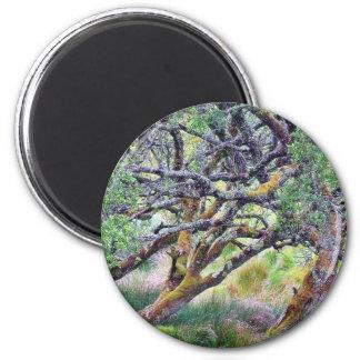 Paso de Glengesh en el árbol viejo de Irlanda Imanes Para Frigoríficos