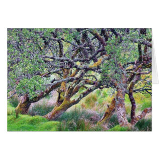 Paso de Glengesh en el árbol viejo de Irlanda Tarjeton