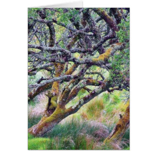 Paso de Glengesh en el árbol viejo de Irlanda Felicitaciones