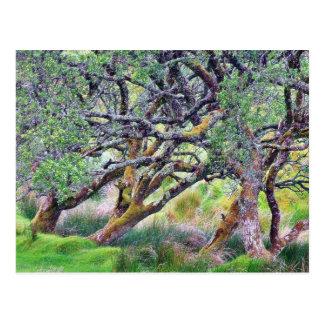 Paso de Glengesh en el árbol viejo de Irlanda Tarjetas Postales