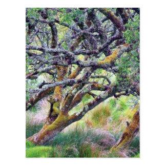 Paso de Glengesh en el árbol viejo de Irlanda Postal