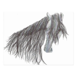 Paso Fino Horse Drawing Postcard