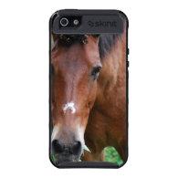 Paso Fino Horse iPhone 4 Case