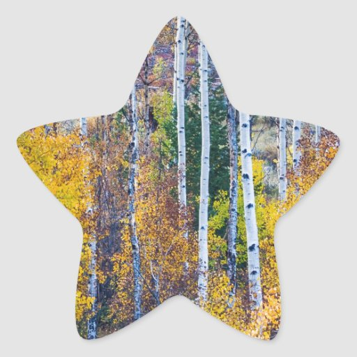 Paso mágico del Cottonwood del árbol de Aspen Pegatinas Forma De Estrellaes