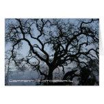 Paso Robles 2 Greeting Cards