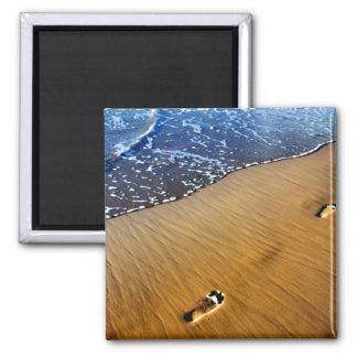 Pasos de la playa imanes de nevera