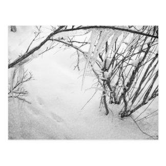 Pasos en la nieve tarjeta postal