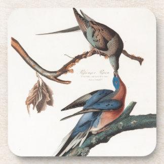 Passenger Pigeon (1838) John J. Audubon Coaster