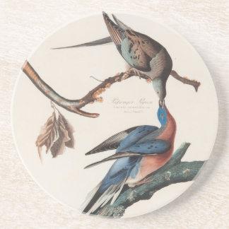 Passenger Pigeon (1838) John J. Audubon Beverage Coaster