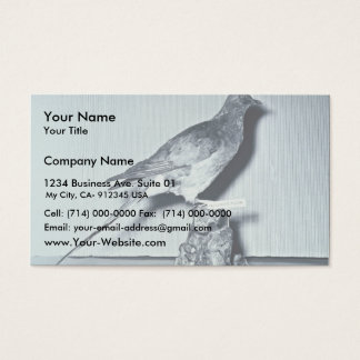 Passenger Pigeon Business Card