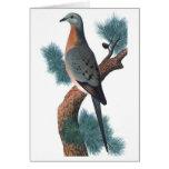 Passenger Pigeon - Ectopistes migratorius Greeting Cards