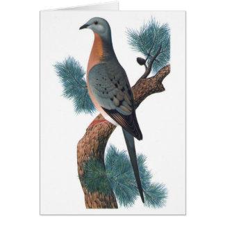 Passenger Pigeon - Ectopistes migratorius Card