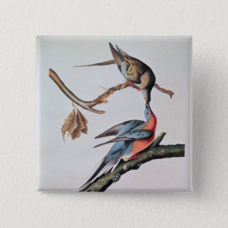 Passenger Pigeon, from 'Birds of America' Button