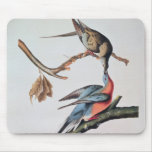 Passenger Pigeon, from 'Birds of America' Mouse Pad